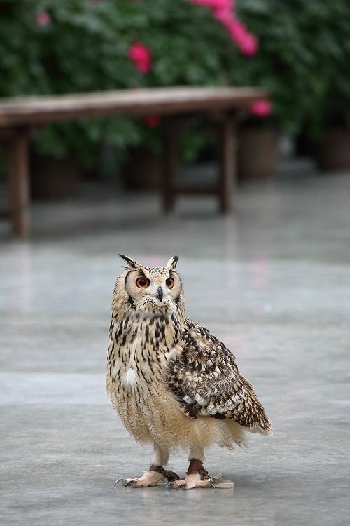 掛川花鳥園09