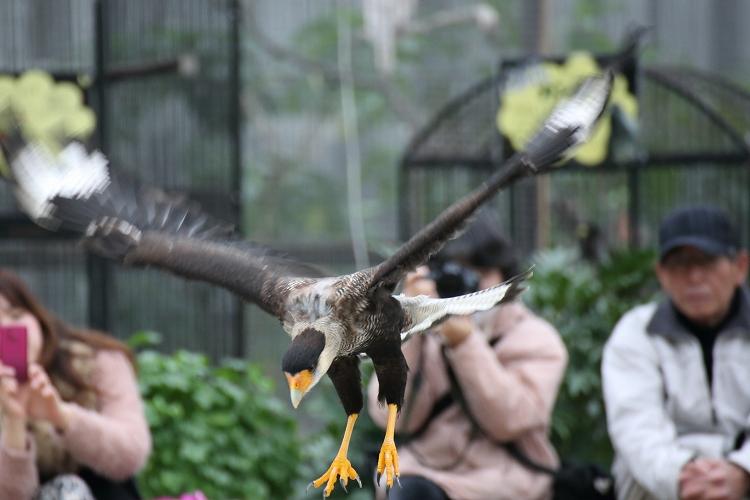 掛川花鳥園12