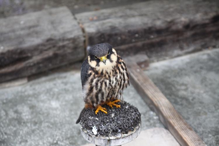 掛川花鳥園02