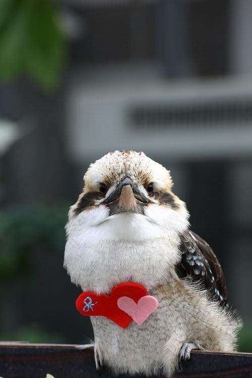 掛川花鳥園33