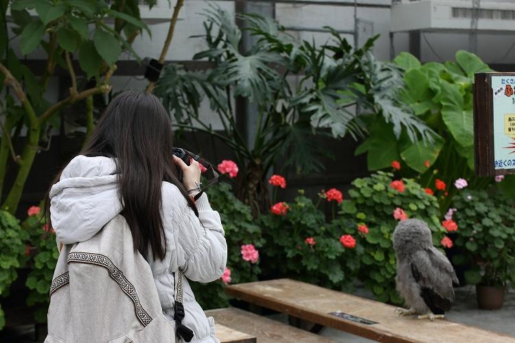 掛川花鳥園27