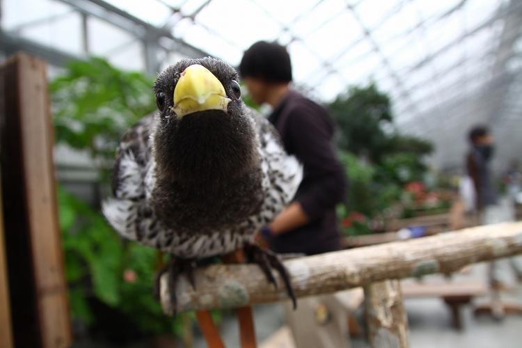 掛川花鳥園25