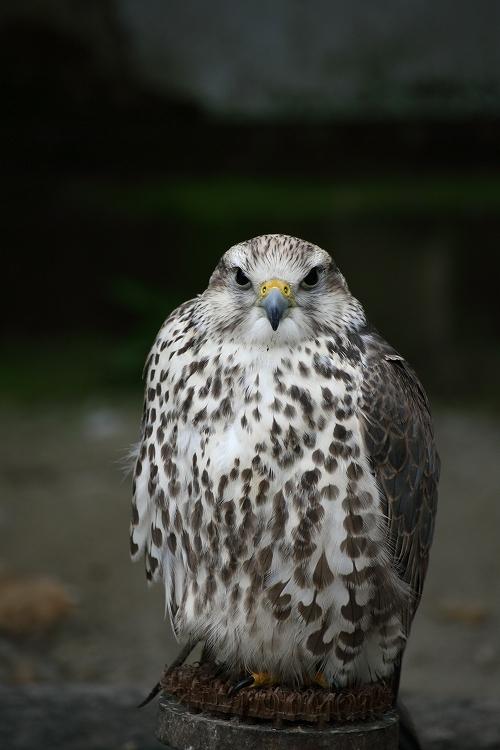 掛川花鳥園21