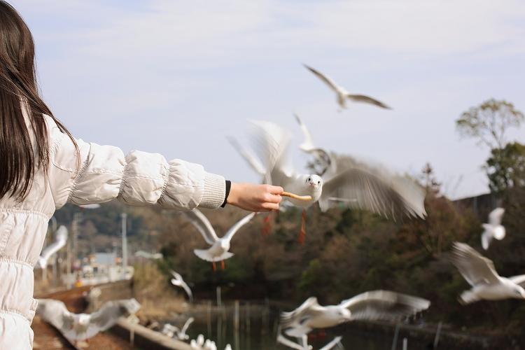 掛川花鳥園54