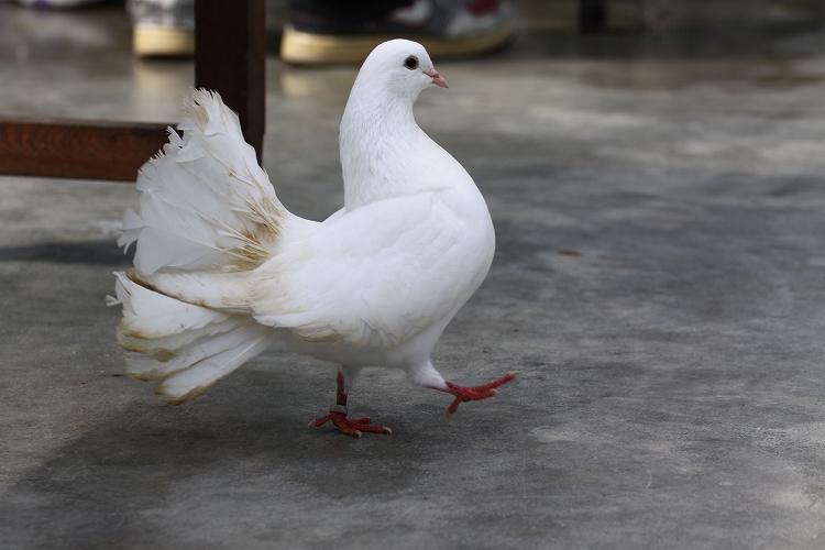 掛川花鳥園51