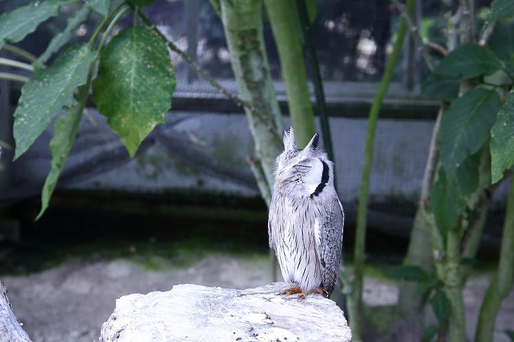 掛川花鳥園52