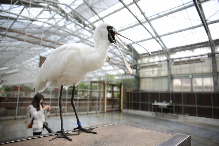 掛川花鳥園45