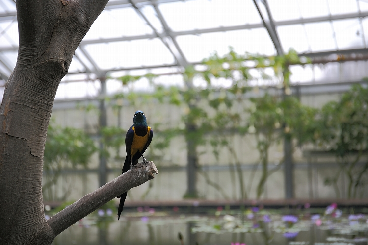 掛川花鳥園43