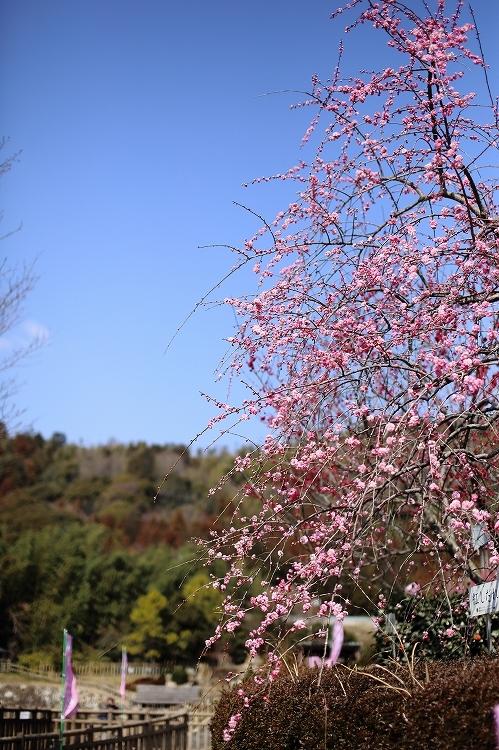 赤塚山公園10