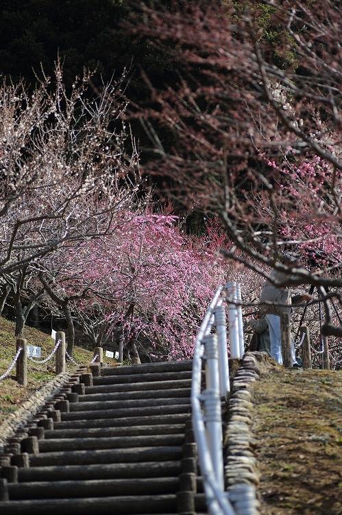赤塚山公園06