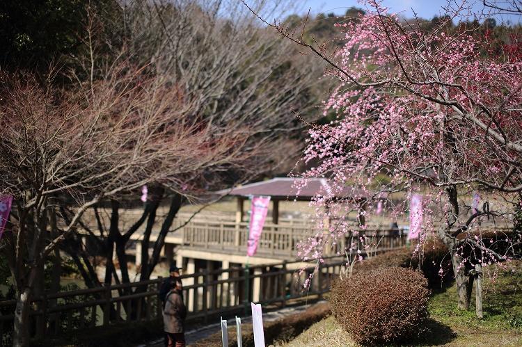 赤塚山公園03