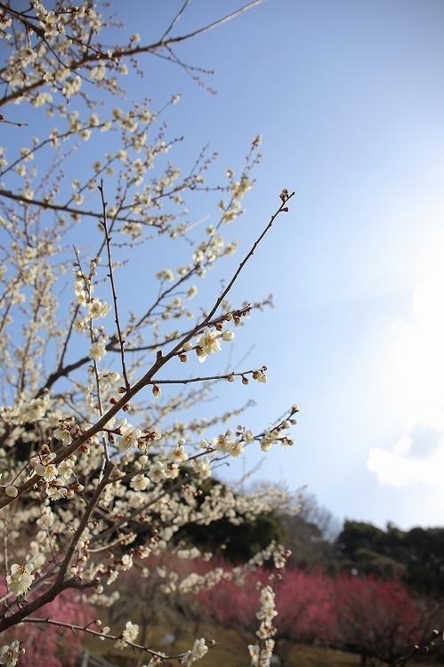 赤塚山公園05