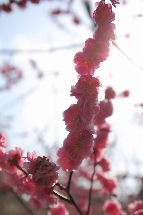 赤塚山公園04