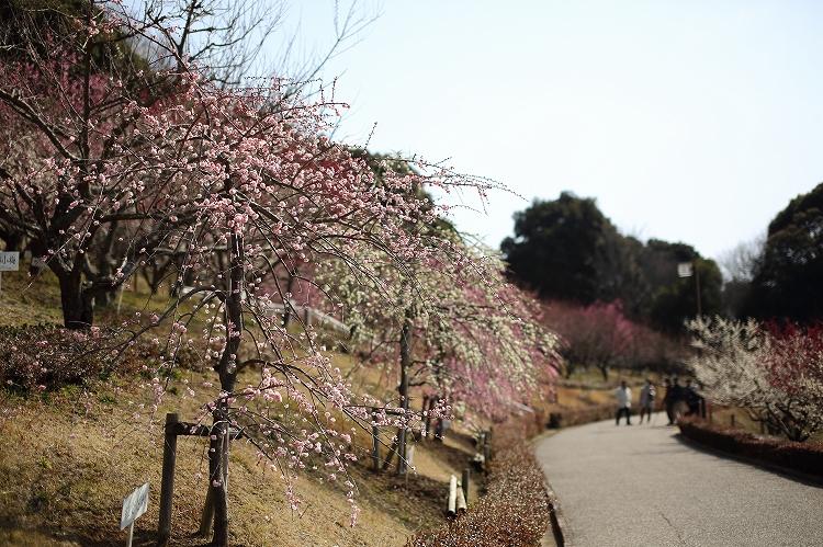 赤塚山公園17