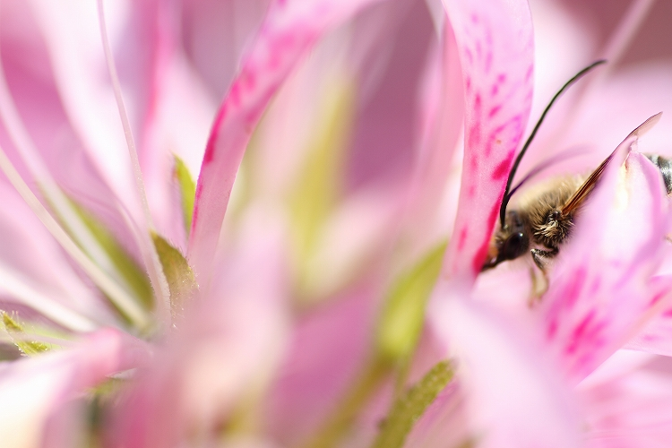クマバチSOS15