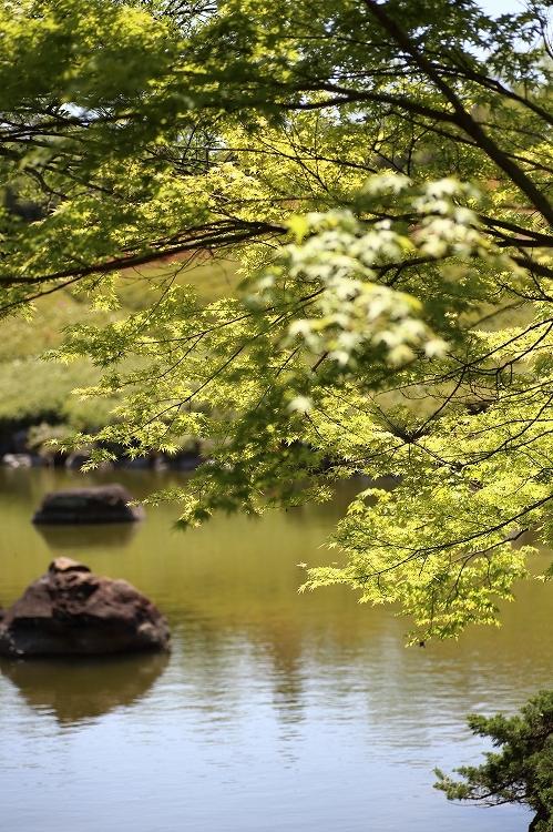 GW昭和の森10