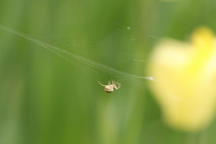 蜘蛛の巣が気になる時が多い09