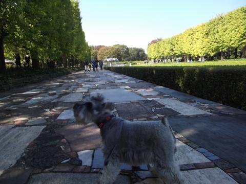 DSCF4730_昭和記念公園