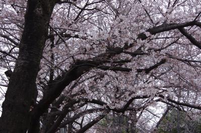 4.桜は三分咲き