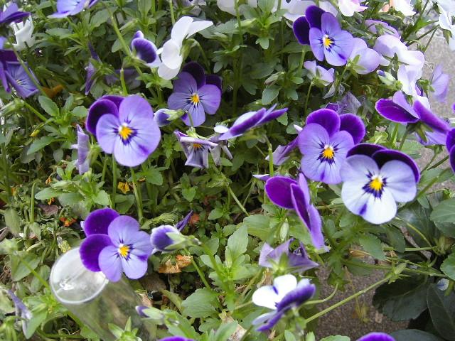 庭の花壇?!です。。