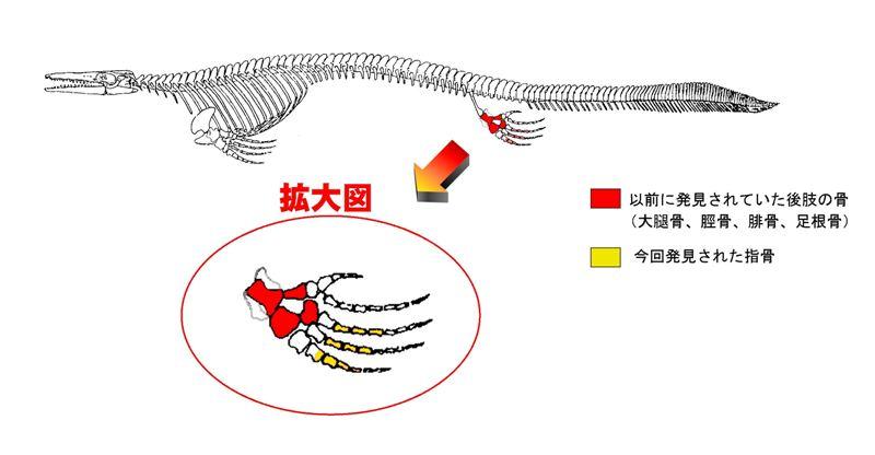 モサ骨格図