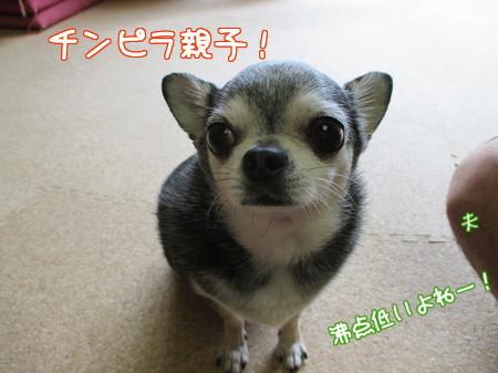 チャポリ&夫(ひざ)