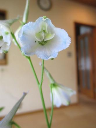 やさしい花・・・