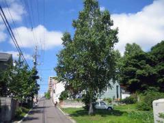 今朝の北海道1