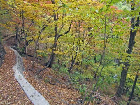 登山道紅葉