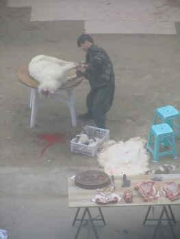 羊の公開処刑