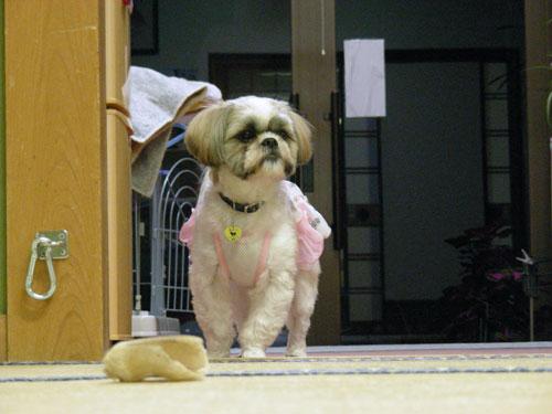 shizu20120307_08.jpg
