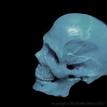 頭蓋骨 ワックス