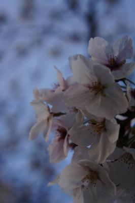 201304花撮影6