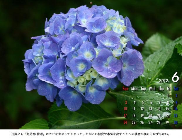 6_20120209221648.jpg