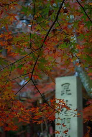 bisyamon05.jpg