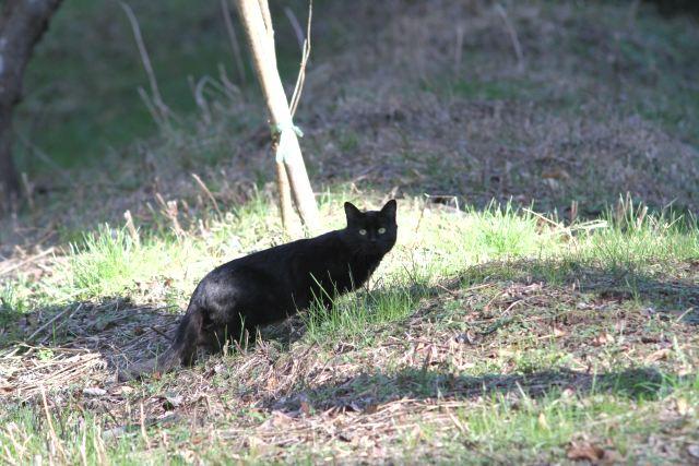黒猫-Im1_7483
