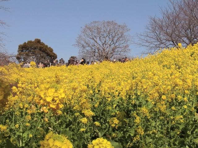 吾妻山公園-Rimg0673