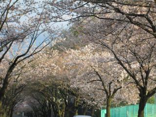葉桜_06