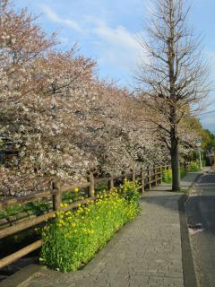 葉桜_02