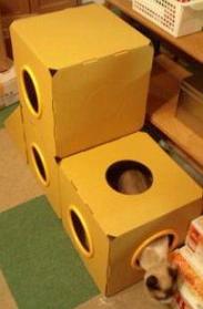 cat@201107play_box31B.jpg