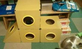 cat@201107play_box31C.jpg