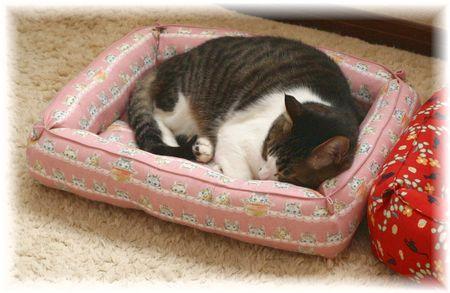 スージーのお気に入りのベッド^^