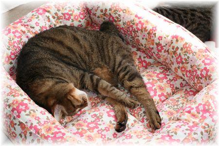 穏やかな寝姿のドリル