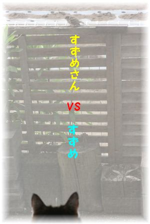 すずめさん vs スーちゃん