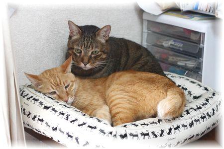 蔵出し猫ベッドとドリルとチャンちゃん