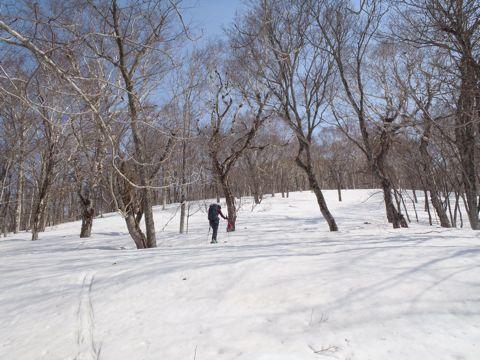 春の広葉樹林