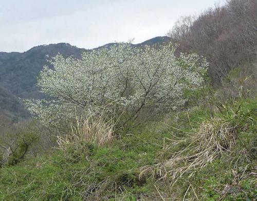 幕山・ハイキング12