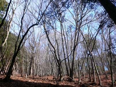 最初 樹林