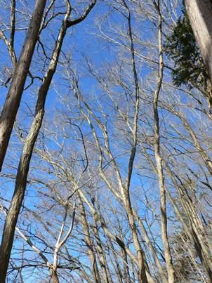 青空と樹林