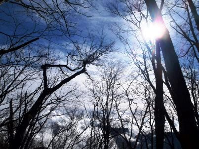 太陽と樹林